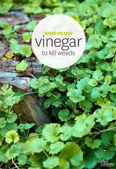 Rid your garden of weeds with all-natural vinegar! Learn how here: www.bhg.com/...