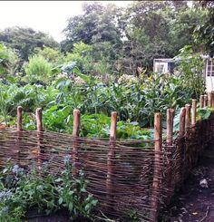Wicker fence surrounding kitchen garden