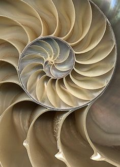 This is Zen. The cross-section of a nautilus shell. Fibonacci.