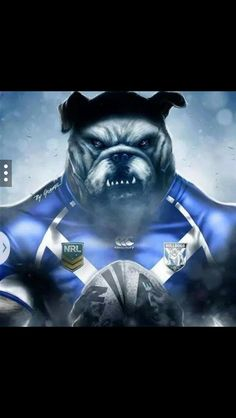 This is the photo if the Bulldogs were actually real Bulldogs