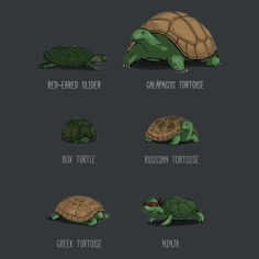 Know Your Turtle... from Tortoises to Mutant Ninjas.