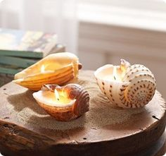 shell candles for our special collected shells this summer