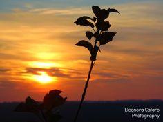 Ombre al tramonto