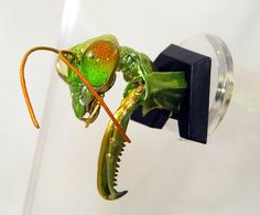 Takara Tomy ARTS Japanese Insect head Collection Chinese mantis ornament new | eBay