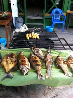 Iquitos, Peru You're Awesome, Foodies, Fish, Chocolate, Woman, Travel, Beverages, Iquitos