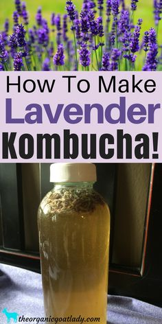 Do you flavor your own Kombucha or would you like to learn how? Then you are going to love this Lemon Lavender Kombucha Recipe! Lavender Lemon Kombucha is. Best Kombucha, Diy Kombucha, Kombucha Flavors, Probiotic Drinks, Best Probiotic, Vegetarian Recepies, Healthy Drinks, Healthy Food, Vegan Food