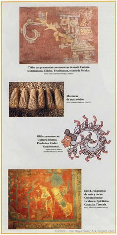 Corn Glyph Murals - Maya Seed Ark Project Photos