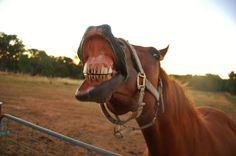 Es begegnen einem immer wieder lustige Tiere auf einem Road Trip :-).    www.bringhand.de/blog