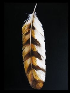 Owl Feather: Wisdom, the ability to see things normally, creature of the night, silent, and swift. (black color)