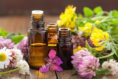 Essential Oils and The Sense Of Smell: The Power Of Healing