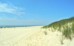 Cooper's Beach: Dune Grass at cooper beach. East coast beaches have a special beauty.
