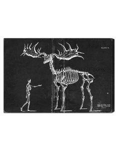 Fossil Elk 1830 Canvas Art