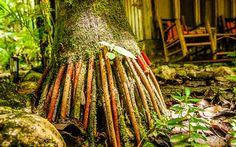 Ökotourismus in Zentralamerika, im Einklang mit der Natur