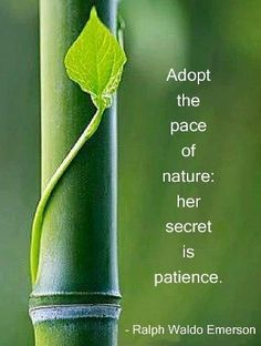 Ralph-Waldo-Emerson-Adopt-the-pace-of-nature-her-secret-is-patience.jpg 363×480 pixels