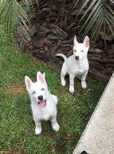 EstiloDF » Conoce a los increíbles perros de Maluma