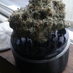 Coastal good life (Snoops Dream) #weed #snoopdogg #snoopsdream #oregon #keeporegongreen #oregonweed #high #coastlife #weednation #weedclan #thegoodlife #cannabiscommunity #cannabis #cannabissociety #lit #420friendly #420🔥 #420🍁 #smokeweedeveryday #smoketrees #weedgram #thatfire #thatloud #thatgoodgood #weednugs #weednerd #stoner #stonersdaily #stonersociety #nugz    #Regram via @brettdohaniuk)