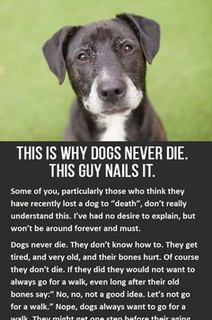 This is why dogs never die. You have to click to read the whole thing, but it's so worth it! http://iheartdogs.com/this-is-why-dogs-never-die/