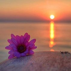 - you're not the only one - IvyRio Moonlight Photography, Dreamy Photography, Sunset Photography, Sunset Wallpaper, Nature Wallpaper, Flower Backgrounds, Wallpaper Backgrounds, Beautiful Sunset, Beautiful Images