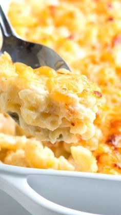You'll love this ultra creamy mac and cheese recipe! With the perfect ratio of milk to cheese to sauce, this macaroni and cheese is at the top of my favorites list! mac and cheese recipe Ultra Creamy Baked Mac and Cheese Best Macaroni And Cheese, Macaroni Cheese Recipes, Creamy Mac And Cheese, Baked Mac And Cheese Recipe With Cream Cheese, Mac And Cheese Recipe For A Crowd, Mac And Cheese Recipe Evaporated Milk, Mac N Cheese Bake, Bacon Mac And Cheese Recipe Baked, Vegetarian Recipes
