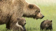 Image result for bear world s idaho