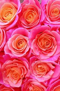 Celeste mookherjee pinterest hot pink orange pink and orange crush pink and orange roses mightylinksfo