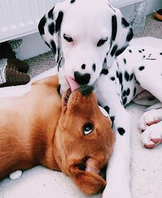 Dog And Puppies Golden Retriever .Dog And Puppies Golden Retriever Super Cute Puppies, Super Cute Animals, Cute Little Animals, Cute Dogs And Puppies, Cute Funny Animals, Doggies, Puppies Puppies, Pomeranian Puppy, Cutest Animals