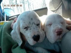 Dusty & Luke on their journey home with us!  They were soooo cute!