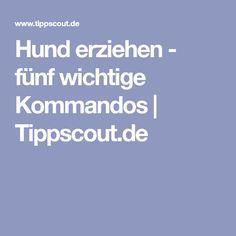 Hund erziehen - fünf wichtige Kommandos | Tippscout.de