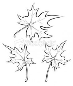 ist2_10171802-maple-leaves-freehand-drawing