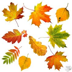 Hojas Otoñales de fondo transparente en PSD (Autumn Leaves with transparente background) | Recursos 2D.com