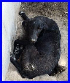 MAMY i suoi cuccioli sono morti e lei disperata cura una buca vuota - http://hormiga.it/mamy-i-suoi-cuccioli-sono-morti-e-lei-disperata-cura-una-buca-vuota/