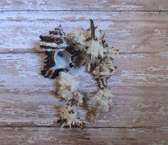 Beach Decor Seashells  Brown Murex Shells for Beach by CereusArt