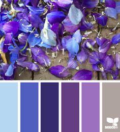 petaled palette