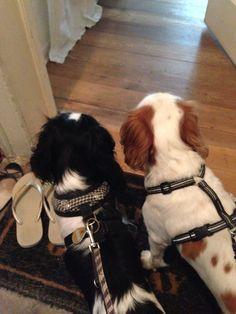 Hundefreundinnenliebe