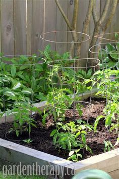 Turning Lawn into a Vegetable Garden with Raised Beds #garden