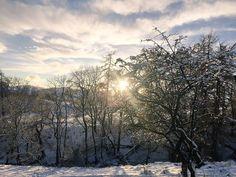 #snow by herdyshepherd1