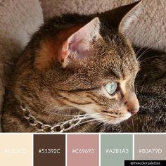 Neapolitan Cat   Color Palette Inspiration.   Digital Art Palette And Brand Color Palette.