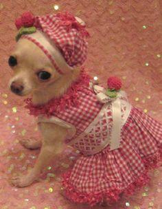 vestito cane