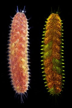 Bizarre Photos Of Underwater Worms Prove Nature Can Outdo Your Wildest Fantasies