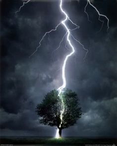 Lightning vs Tree