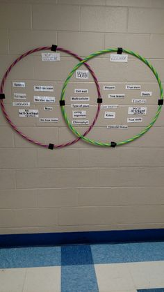 Non vascular & vascular plant hula hoop Venn diagram - Bildung High School Biology, Biology Teacher, Science Biology, Teaching Biology, Middle School Science, Science Education, Life Science, Forensic Science, Science Books