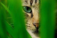 Mirando