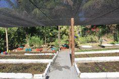 agricultura estrutura sombrite - Pesquisa Google