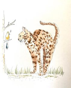 Giraffe, Camel, Moose Art, Creative, Animals, Painting, Cat Cat, Charlotte, Frames