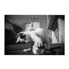 https://flic.kr/p/CSSii1 | Child of Q-chan January 2016 #cat #photograph #blackandwhitephotography