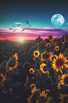 The sky is so tragically beautiful.a graveyard full of stars 🌙✨🌻 . Flower Phone Wallpaper, Summer Wallpaper, Cute Wallpaper Backgrounds, Aesthetic Iphone Wallpaper, Galaxy Wallpaper, Nature Wallpaper, Aesthetic Wallpapers, Cute Wallpapers, Sunflower Photography