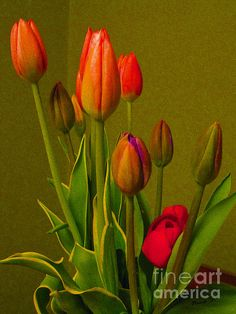 Nina Silver:  'Tulips Against Green'; fine art photography for sale at reasonable prices.
