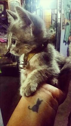 First Tattoo :3 #catlover #animals #tattoo
