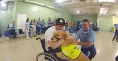 On February 27, 2012, Nick Walczak was one of the students injured in the Chardon High School shooting in Ohio. Nick was shot four times and was paralyzed from the waist down. As we've seen many times before, service dogs are proven to be hugely beneficial for people with disabilities. Enter Turner the Golden Retriever,... View Article