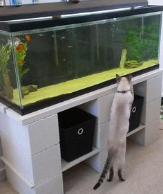 Aquariums are a beautiful addition to the home. They are also insanely heavy and fragile . Think about it this way: a 55-gallon aquari...